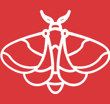 Schmetterlingsmücken